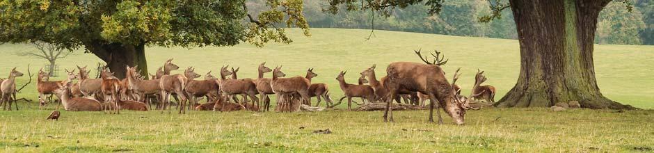 Studley Deer Park